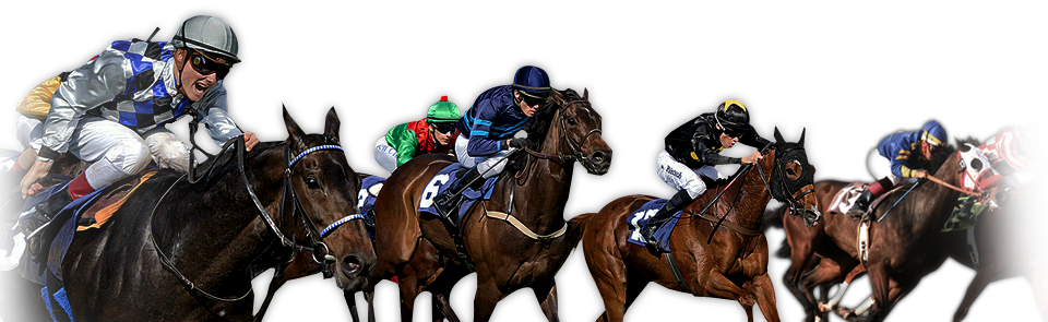 Stallion race official website horse racing fans club virtual stallion race official website horse racing fans club virtual horse racing games online publicscrutiny Gallery